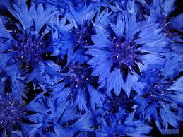 синый колыр що означаэ